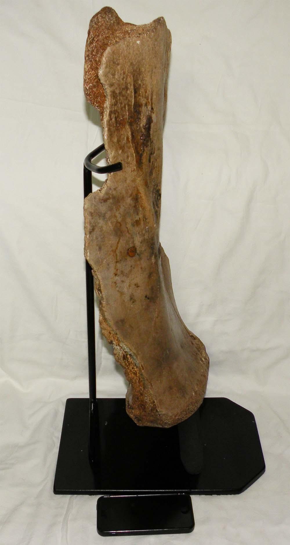 http://www.nuggetsfactory.com/EURO/mammifere/mammouth/os/49%20os%20mammouth%20b.jpg