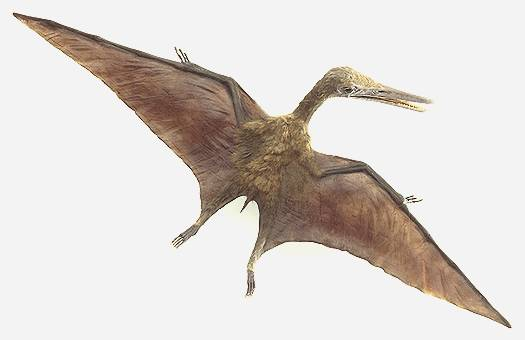 http://www.nuggetsfactory.com/EURO/mammifere/pterosaur/T025577A.jpg