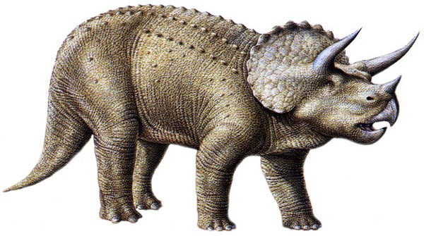 http://www.nuggetsfactory.com/EURO/mammifere/triceratops/triceratops%20pic.jpg