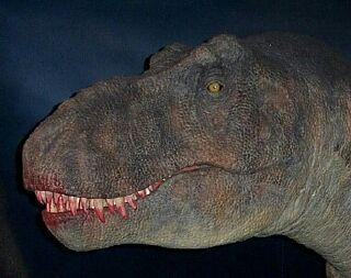 https://www.nuggetsfactory.com/EURO/mammifere/Carcharodontosaurus%20saharicus/trex%2520head.jpg