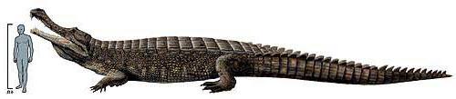 https://www.nuggetsfactory.com/EURO/mammifere/Sarcosuchus/saros%202.jpg