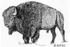 https://www.nuggetsfactory.com/EURO/mammifere/bison/bis%20logo%20petit.jpg