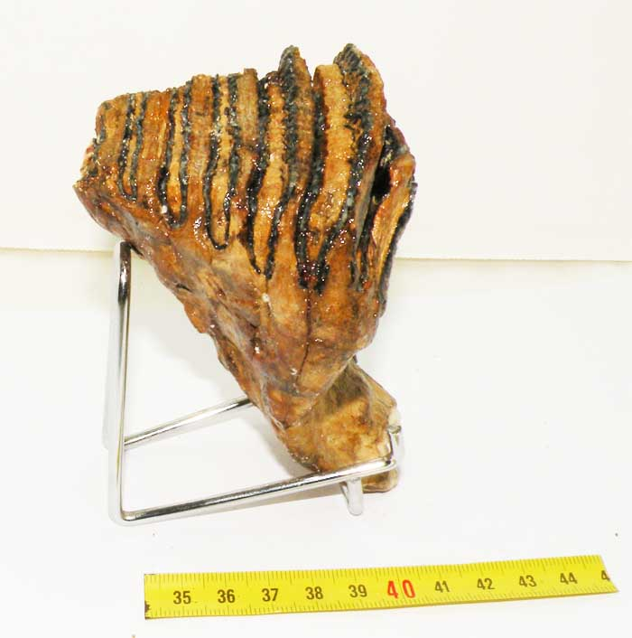 https://www.nuggetsfactory.com/EURO/mammifere/mammouth/61%20dent%20mammouth%20b.jpg
