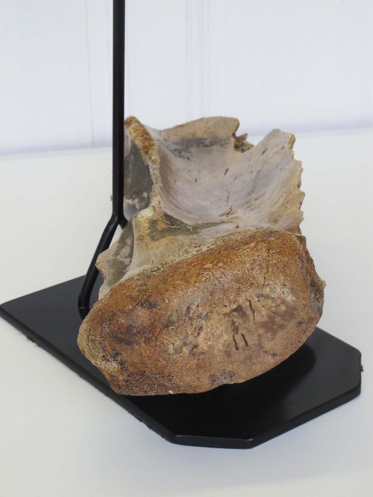 https://www.nuggetsfactory.com/EURO/mammifere/mammouth/os/49%20os%20mammouth%20e.jpg